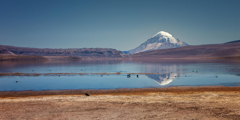 Bezinning van Sajama vulkaan van Chungara-meer, Chili royalty-vrije stock foto's