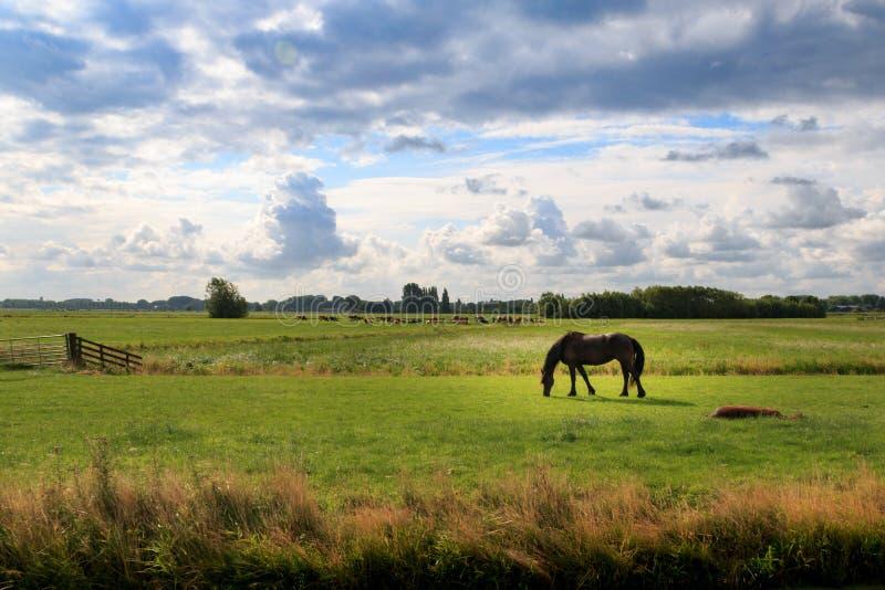 Bezinningen in de landbouwgrond van Nederland stock afbeelding