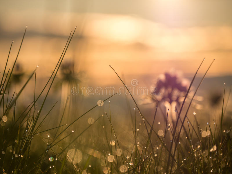 Bezinningen en dalingen van dauw op het gras stock afbeelding