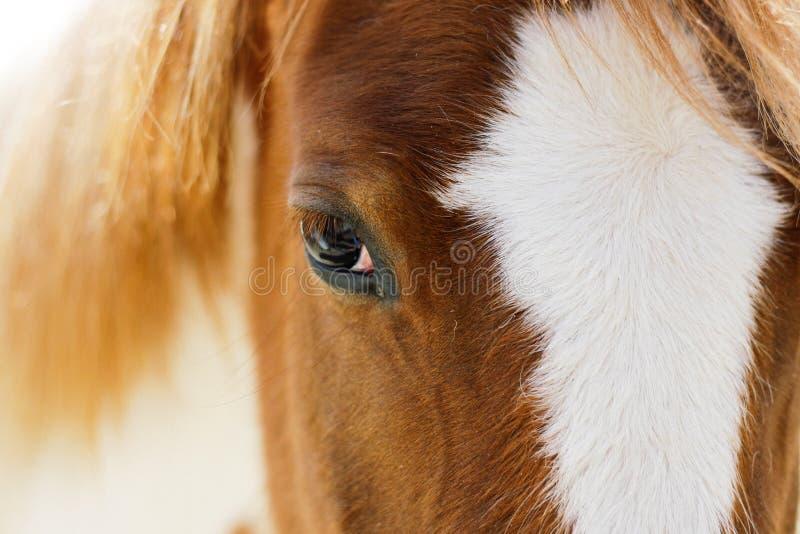 Bezinningen in het oog van een paard stock foto