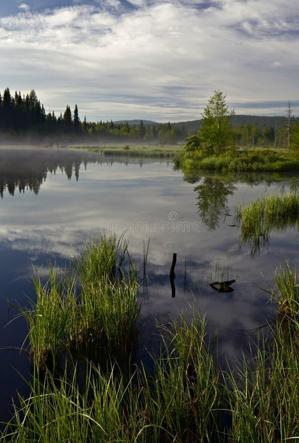 Bezinningen in het water van moeras stock afbeeldingen