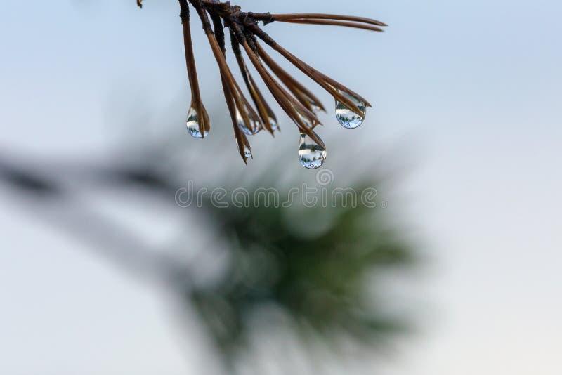 Bezinningen in regendalingen royalty-vrije stock fotografie