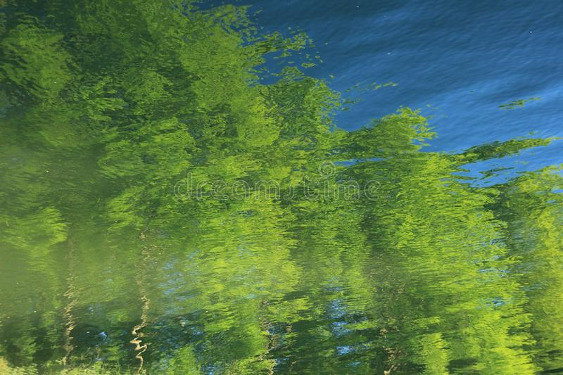 Bezinningen van de bomen in het meer royalty-vrije stock foto
