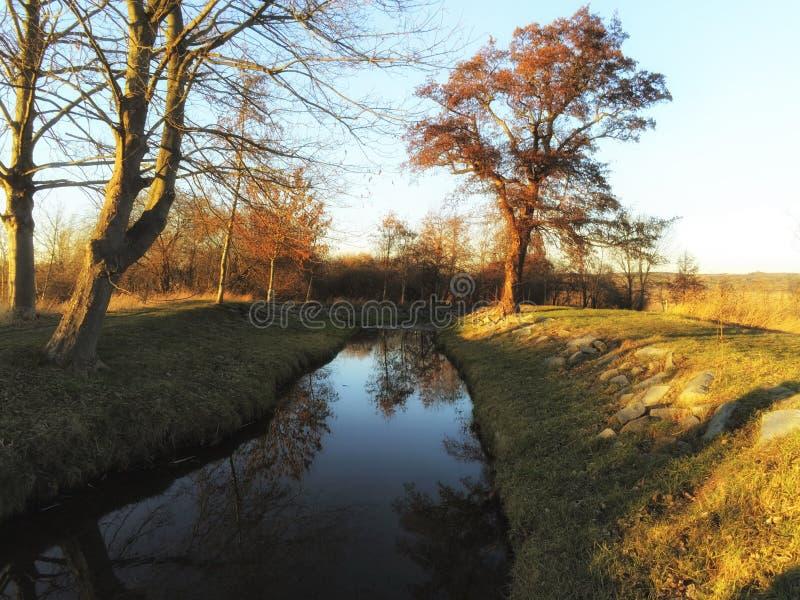 Bezinningen van de bomen in het water van een stroom royalty-vrije stock foto