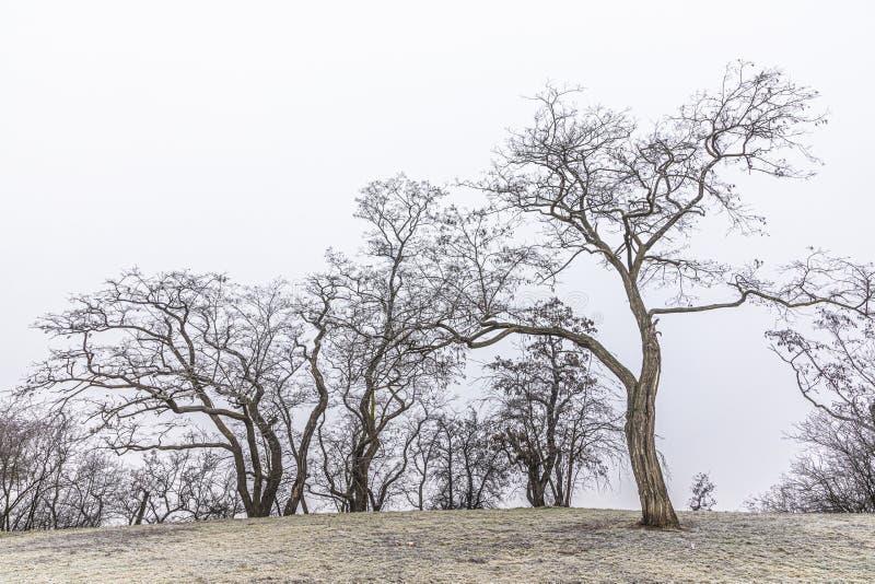 Bezliściaste drzewa w mrozie chrzęstnej w okresie zimowym zdjęcie stock