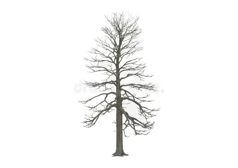 bezlistna drzewna zima ilustracja wektor