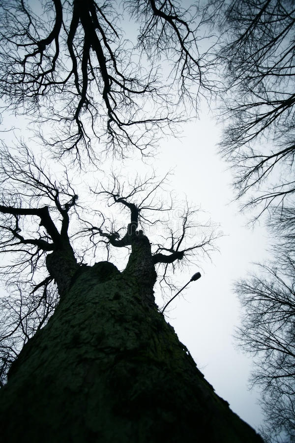 Download Bezlistni drzewa zdjęcie stock. Obraz złożonej z botanika - 53787632
