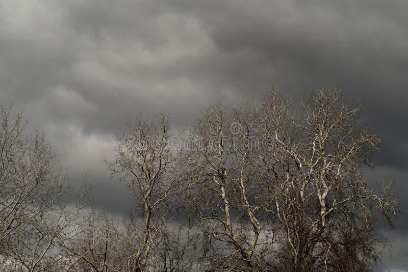 Bezlistni drzewa i siwieją chmury zdjęcie royalty free