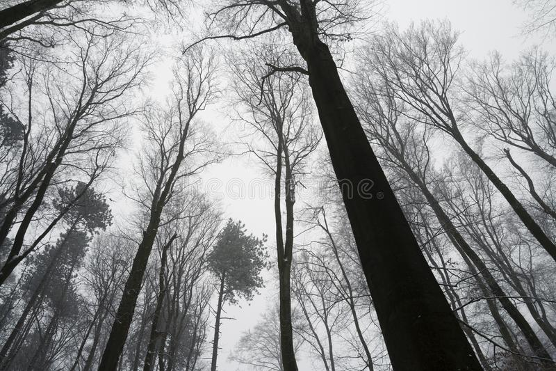 Bezlistny deciduous las w zimie fotografia stock
