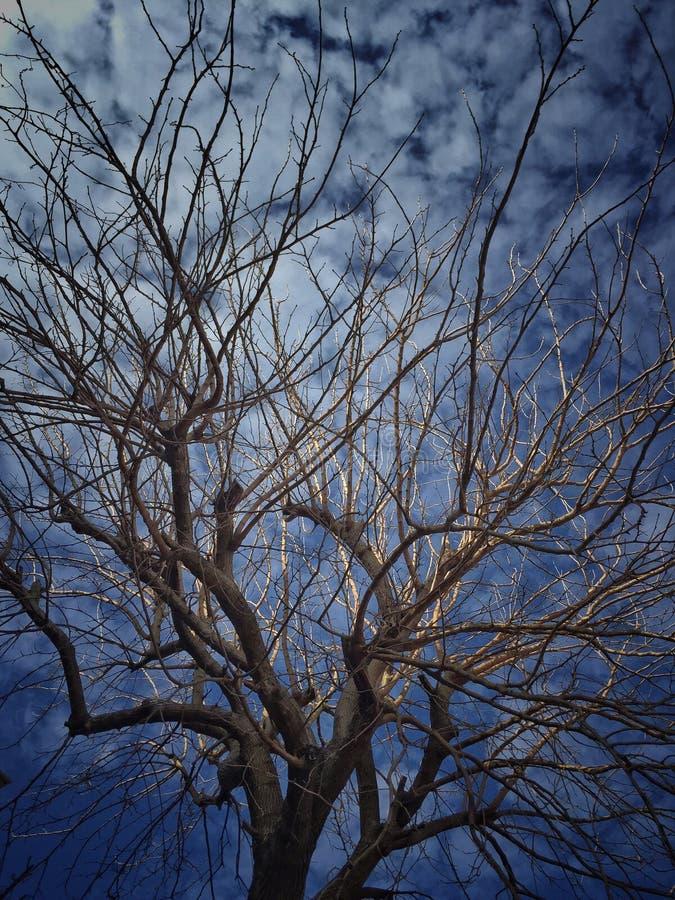 Bezlistny drzewo przeciw niebieskiemu niebu fotografia stock