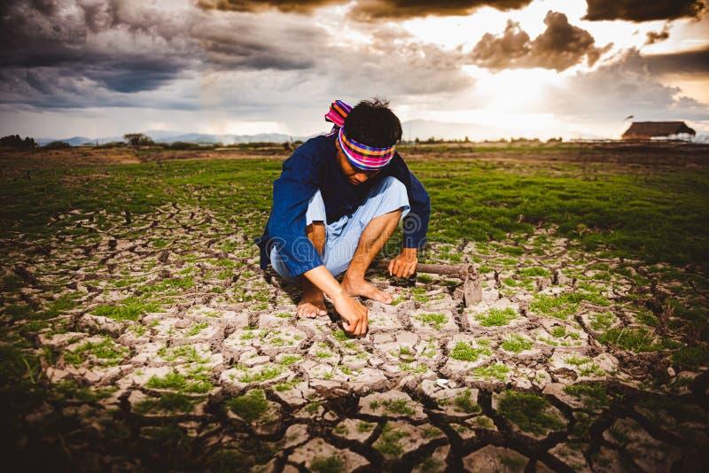 Beznadziejny i osamotniony rolnik sitiing na suchej ziemi i znajduje Żywe rośliny Globalne ocieplenie kryzys zdjęcie stock