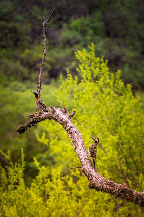 Bezp?atni ptaki w ich naturalnym siedlisku zdjęcia stock