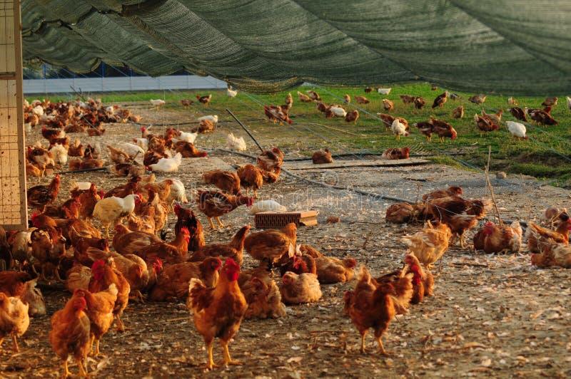 Bezpłatny pasma gospodarstwo rolne zdjęcia royalty free