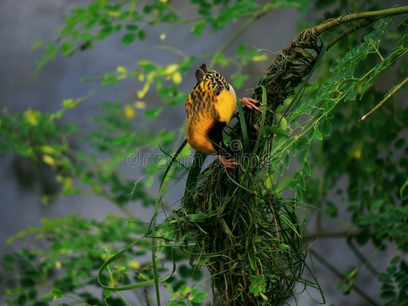 Bezpłatny ptak obrazy stock