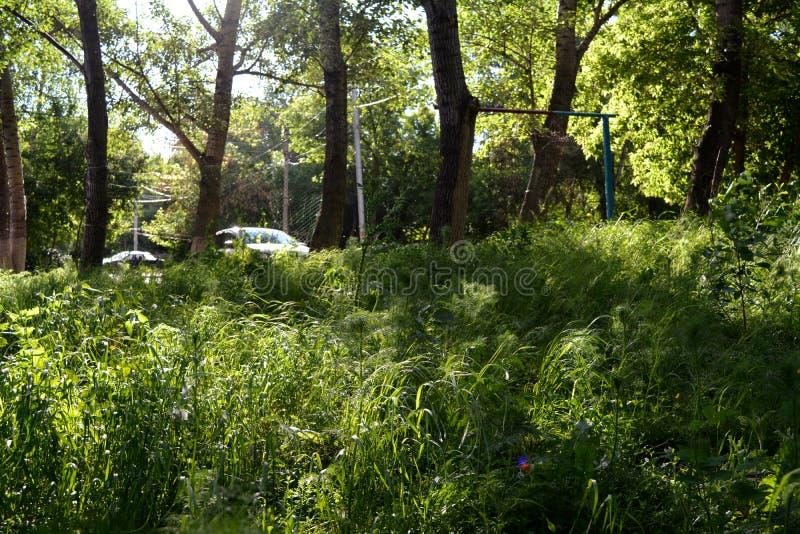 Bezpartyjnik kształtuje teren w miasteczku Greenery miastowy podwórze z skromnymi roślinami fotografia stock