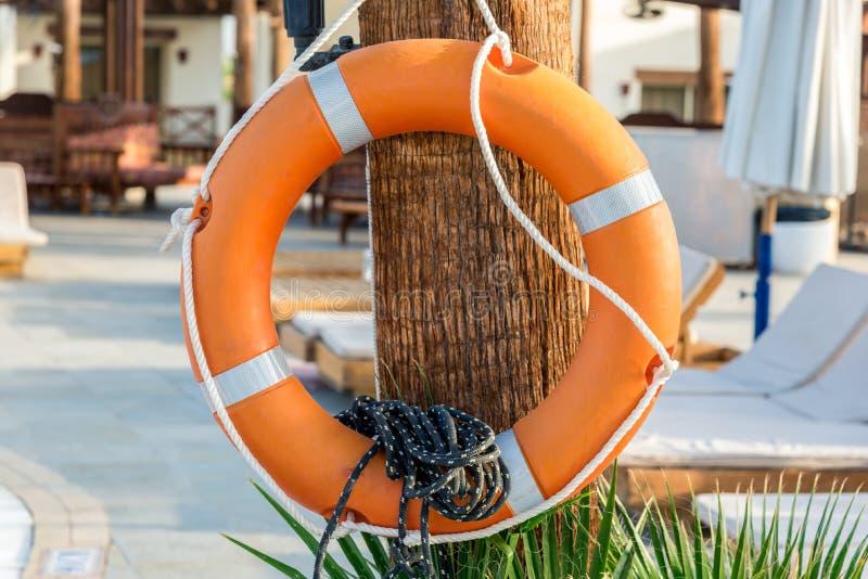 Bezpieczeństwo pomarańczowy lifebuoy obwieszenie na drzewie obraz royalty free