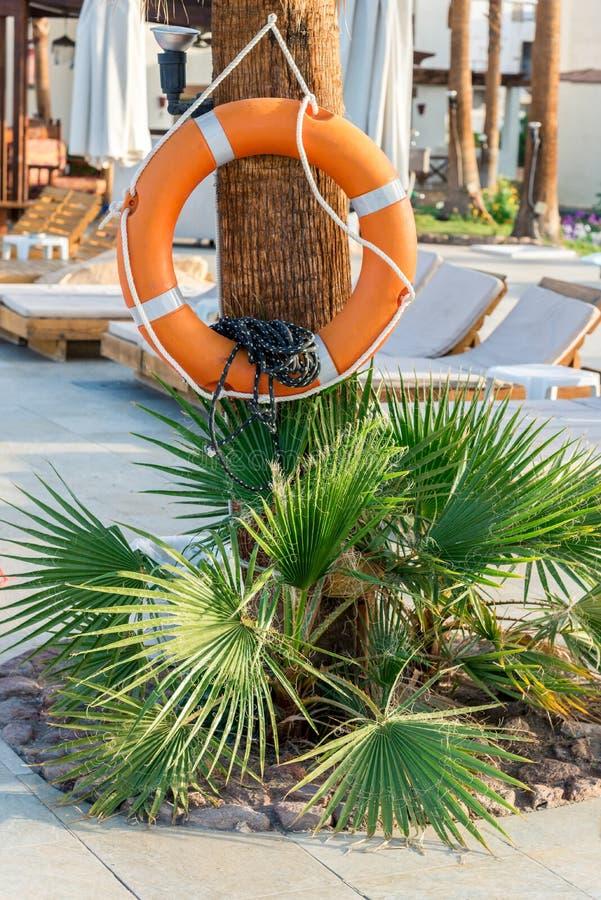 Bezpiecze?stwo pomara?czowy lifebuoy obwieszenie na drzewie zdjęcia stock