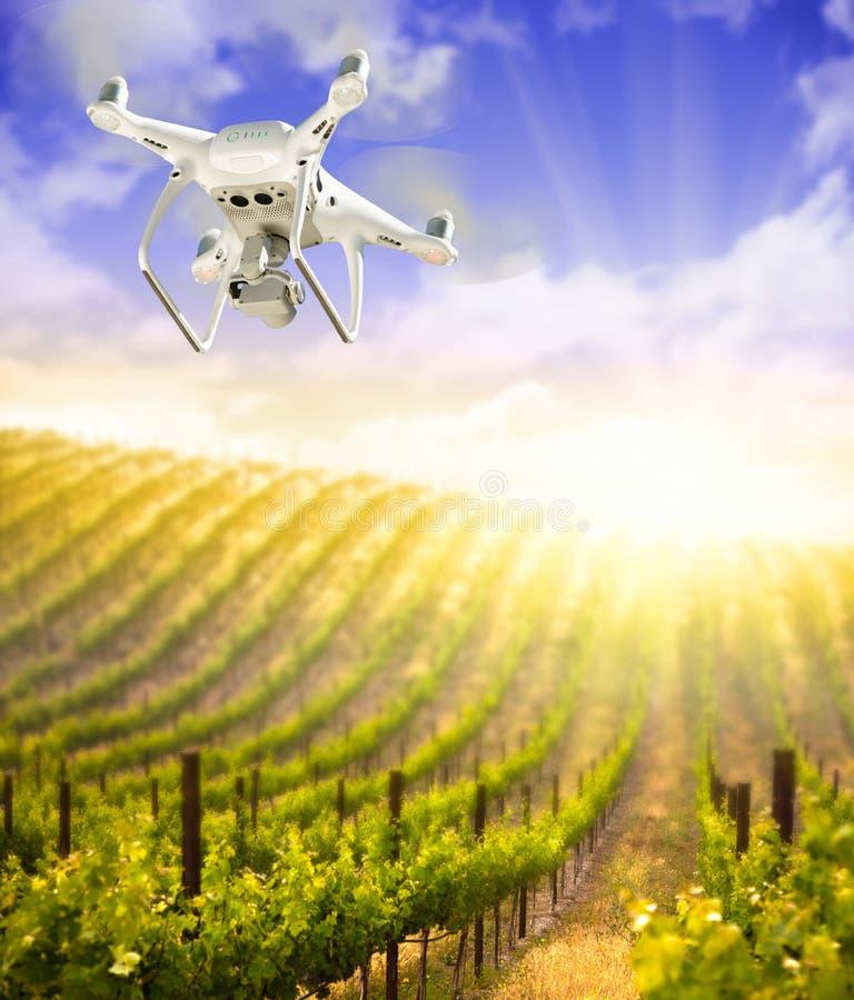 Bezpilotowy samolotu systemu UAV Quadcopter truteń W powietrzu Nad Gronowym winnicy gospodarstwem rolnym zdjęcie royalty free