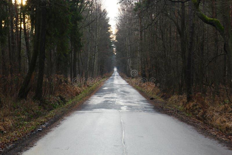 Bezpośrednia asfaltowa droga rozciąga w odległość wśród wilgotnego jesień lasu obraz royalty free