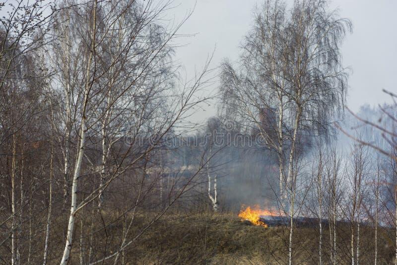 Bezprawny palenie sucha ostatni rok trawa w wczesnej wio?nie obrazy royalty free