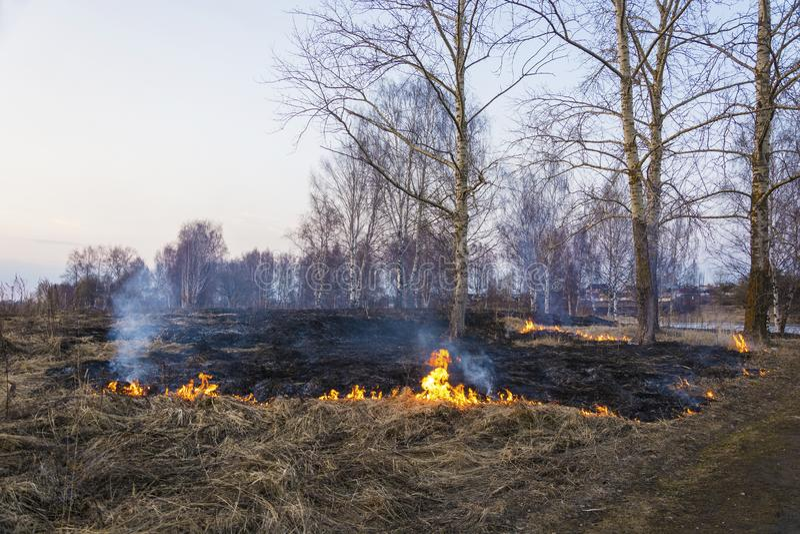 Bezprawny palenie sucha ostatni rok trawa w wczesnej wio?nie obrazy stock