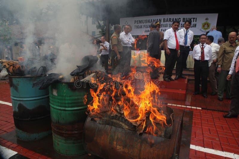 Bezprawny przyroda handel w Indonezja obrazy stock