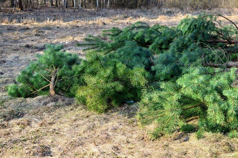 Bezprawny wylesienie, zniszczenie natura zdjęcie stock
