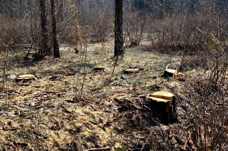 Bezprawny wylesienie, zniszczenie natura zdjęcie royalty free