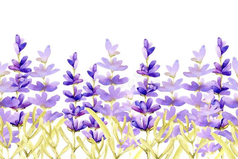 Bezproblemowa krawędź wzorka z kwiatami lawendowymi na łące Ręczna ilustracja akwarelowa ilustracji