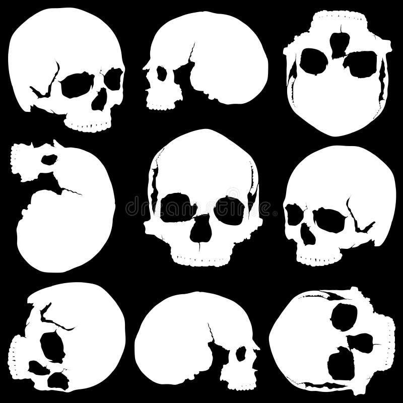 bezszwowa czaszka royalty ilustracja