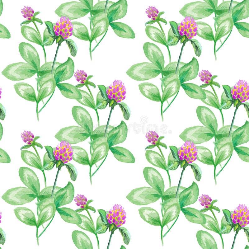 Bezszwowa deseniowa lato łąka kwitnie, koniczyna kwiaty Bezszwowy wzór koniczyna Kwitnie tło, akwarela royalty ilustracja