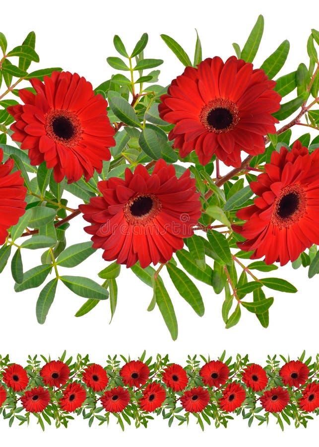 Bezszwowa granica z czerwonymi gerbera kwiatami odosobniony zdjęcie stock