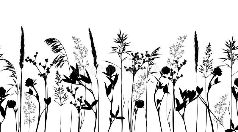 Bezszwowa horisontal granica z dzikimi ziele i kwiatów sylwetkami odizolowywać na bielu ilustracji