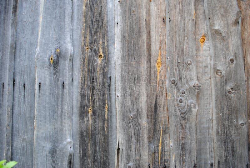 Bezszwowa jaskrawa popielata drewniana tekstura zdjęcia stock