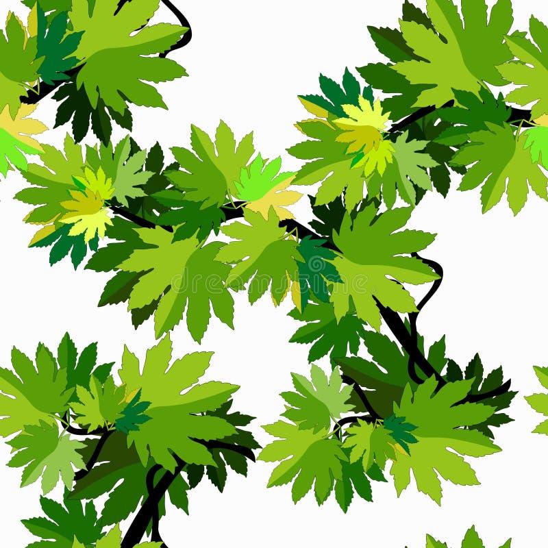 Bezszwowa wzór gałąź klonowego drzewa liście Wektorowy Illustratio ilustracji