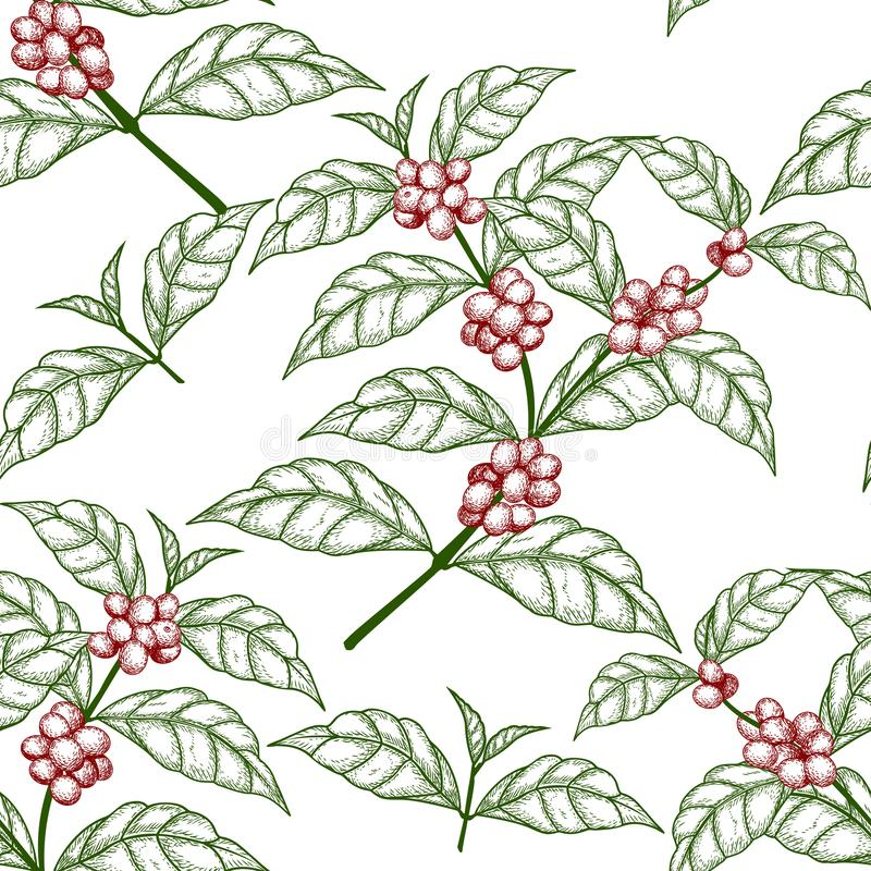 Bezszwowego deseniowego nakreślenia kawowa gałąź z jagodami ilustracji