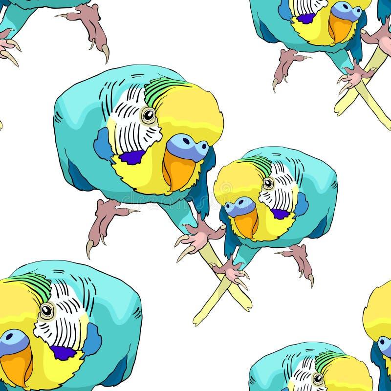 Bezszwowej deseniowej coupe Żółtej twarzy błękitny falisty papuzi Wektorowy illu ilustracji