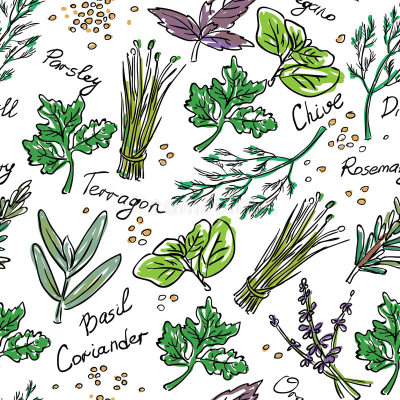 Bezszwowi Deseniowi ziele ustawiający, wektorowa ręka rysująca ilustracja ilustracja wektor