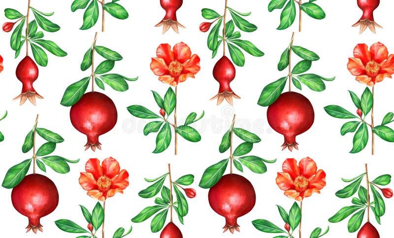Bezszwowy akwarela wzór z granatowem rozgałęzia się i kwiaty odizolowywający na białym tle royalty ilustracja