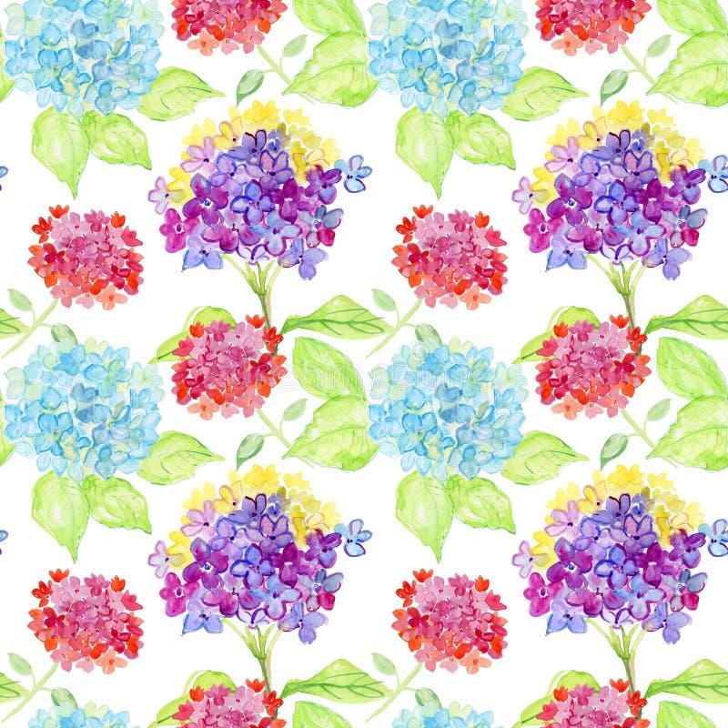Bezszwowy akwareli tło hortensja, kwiecisty wzór royalty ilustracja