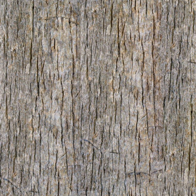 Bezszwowy drzewko palmowe baga?nika t?o zdjęcia royalty free