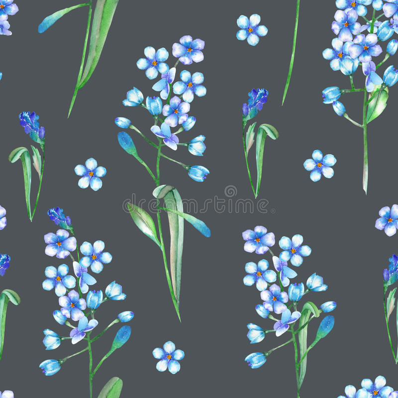 Bezszwowy kwiecisty wzór z błękitnymi kwiatami malującymi w akwareli niezapominajka na ciemnym tle, (Myosotis) ilustracja wektor