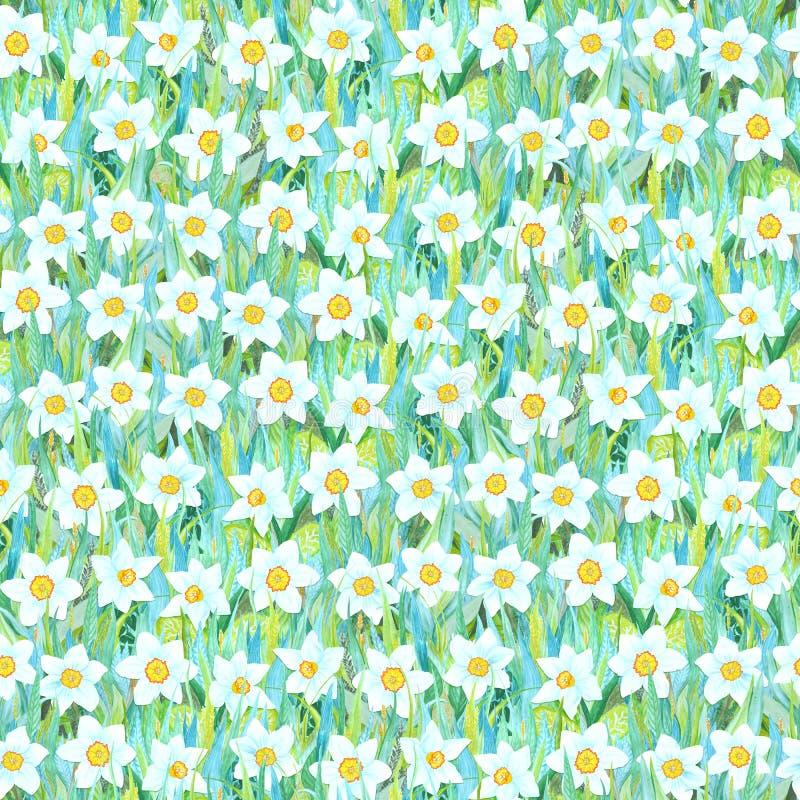 Bezszwowy lato wzór biały narcyz na trawie Kolorowy tło w postaci kwiat halizny royalty ilustracja