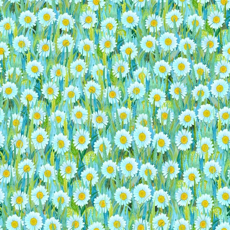 Bezszwowy lato wzór biali chamomiles na trawie Kolorowy tło w postaci kwiat halizny ilustracji