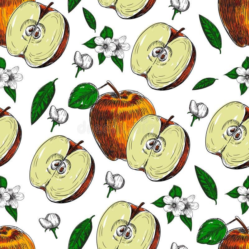 Bezszwowy ręka rysujący jabłko Rocznika nakreślenia stylu ilustracja Organicznie eco jedzenie Całość, pokrajać kawałki połówka, l royalty ilustracja
