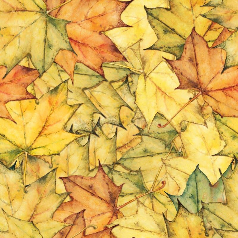 Bezszwowy tło z kolorowymi żółtymi jesień liśćmi klonowymi obrazy stock