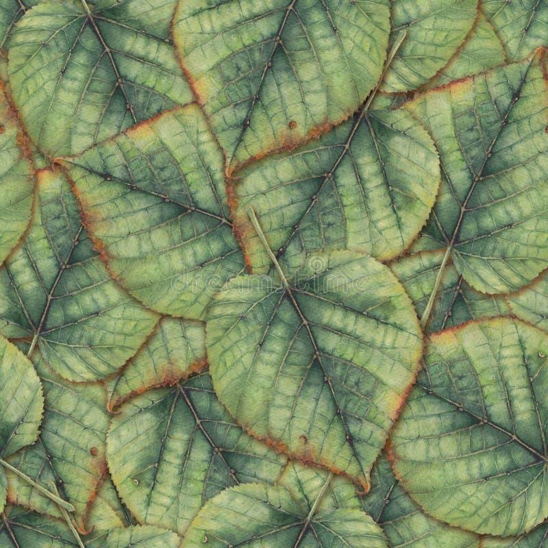 Bezszwowy tło z lipowymi liśćmi obrazy stock