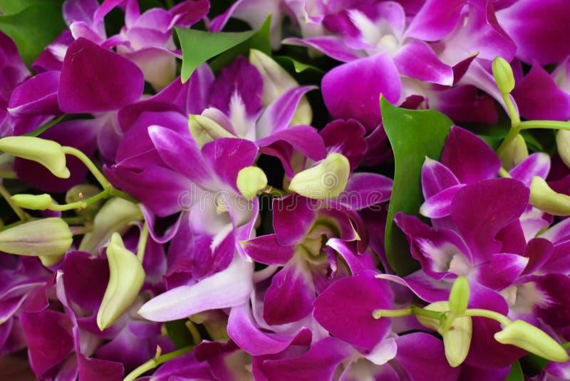 Bezszwowy t?o kolorowi kwiaty fotografia stock