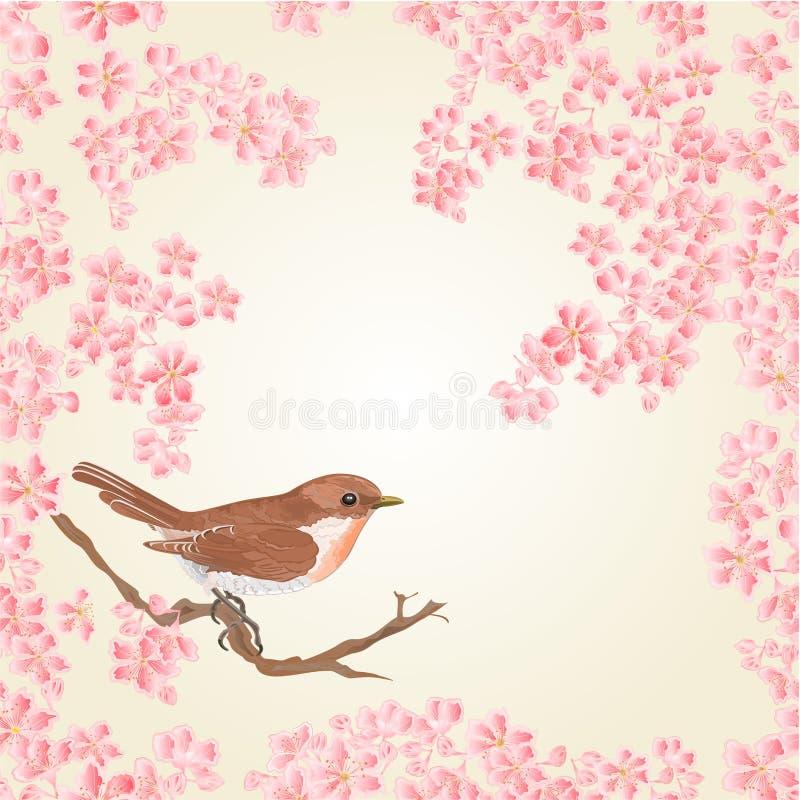 Bezszwowy tekstura ptak i Sakura wektor ilustracja wektor