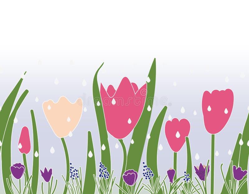 Bezszwowy wektor granicy druku projekt z tulipanów krokusami i gronowymi hiacyntami ilustracji